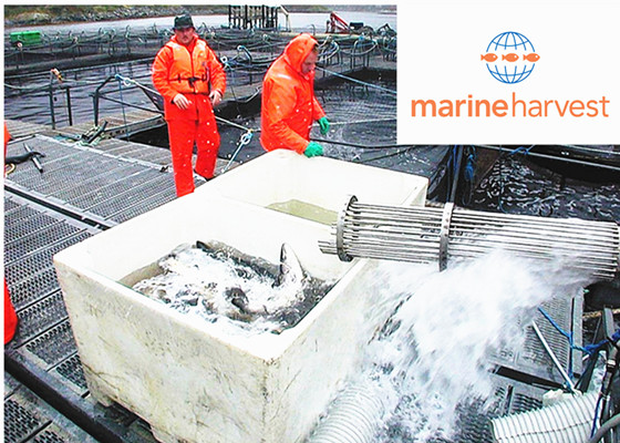 Marine Harvest--the world 's biggest Salmon producer saved